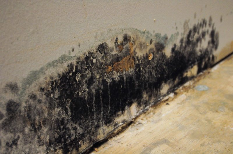 Can Mold Be Deadly Servicemaster By Bob Wright